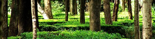 Trees in Condesa park