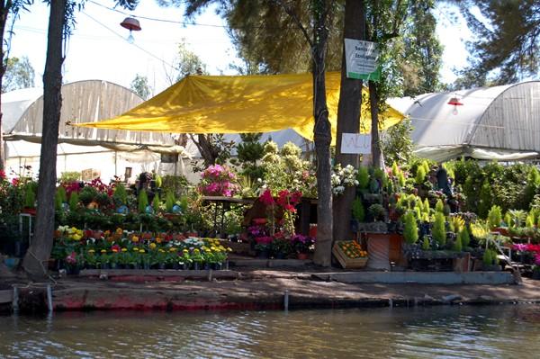 Xochimilco 6