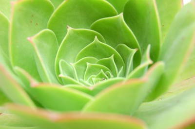 lime green plant