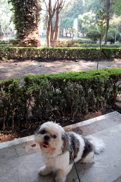 Charlie enjoys the benches in Parque Mexico, Condesa.