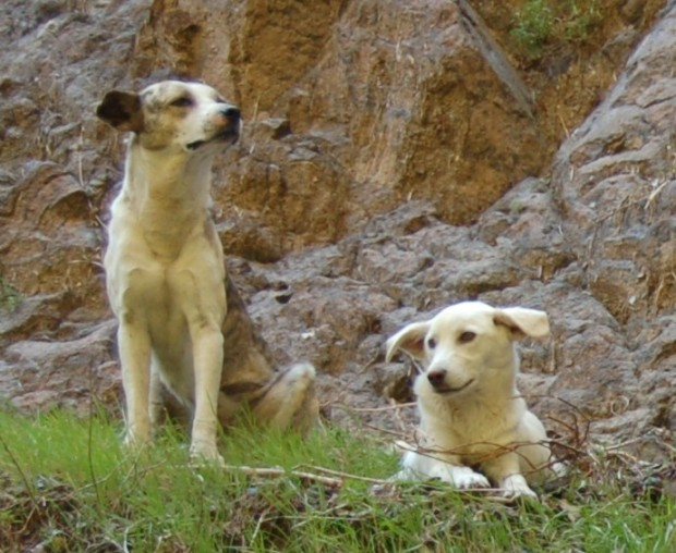 Dogs in Taxco, Mexico. State of Guerrero.