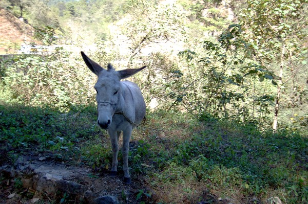 "Brendan started saying ""donkey!"" everytime he spotted one. It got old pretty quick."