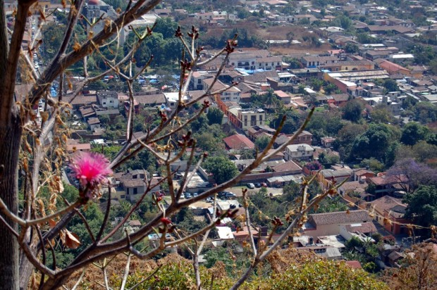 A tree with pink blossoms stands over the town.