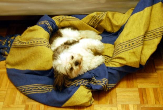 Comfy, Charlie?